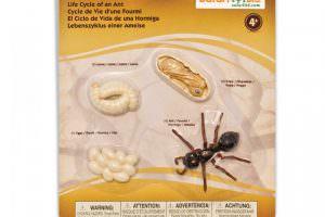 ciclo-de-vida-de-la-hormiga