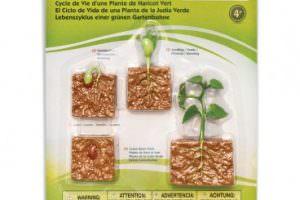 ciclo-vida-de-la-planta