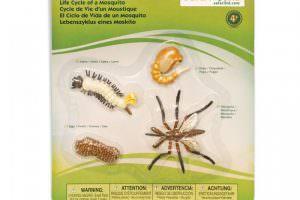 ciclo-vida-del-mosquito