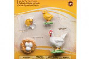 ciclo-vida-de-la-gallina