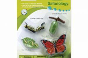 ciclo-de-vida-mariposa